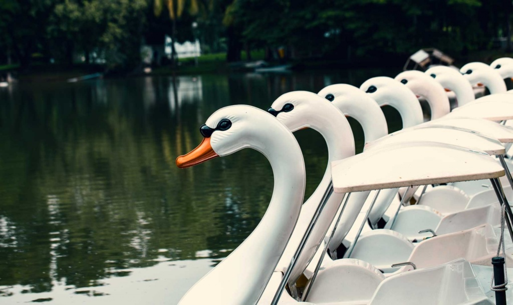 Swan-pedal-Boat-Cannon-Hill-Park
